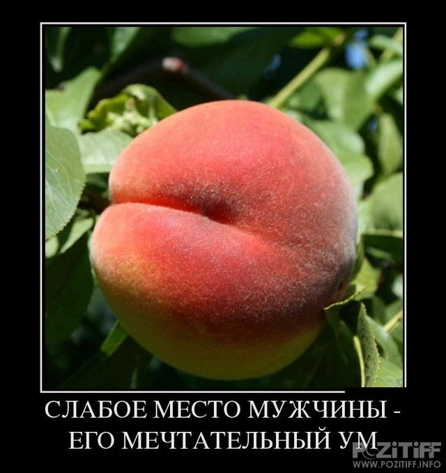 1372976630_demotivatory_291.jpg