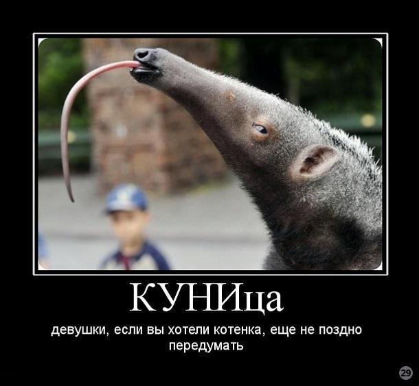 1271449677_959915_kunitsa.jpg