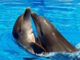 Дельфин аватар